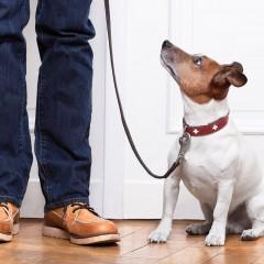 SEAD0412 Adiestramiento de Base y Educación Canina