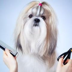 Curso Profesional de Estética y Peluquería Canina y Felina