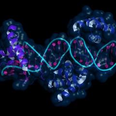 Especialista en Biología Molecular y Citogenética