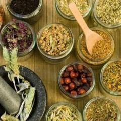 Experto en Plantas Medicinales