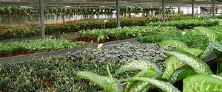 Formaci n online de agau0110 producci n de semillas y for Vivero plantas online