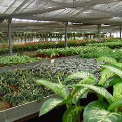 AGAU0110 Producción de Semillas y Plantas en Vivero