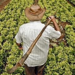 AGAX0208 Actividades Auxiliares en Agricultura